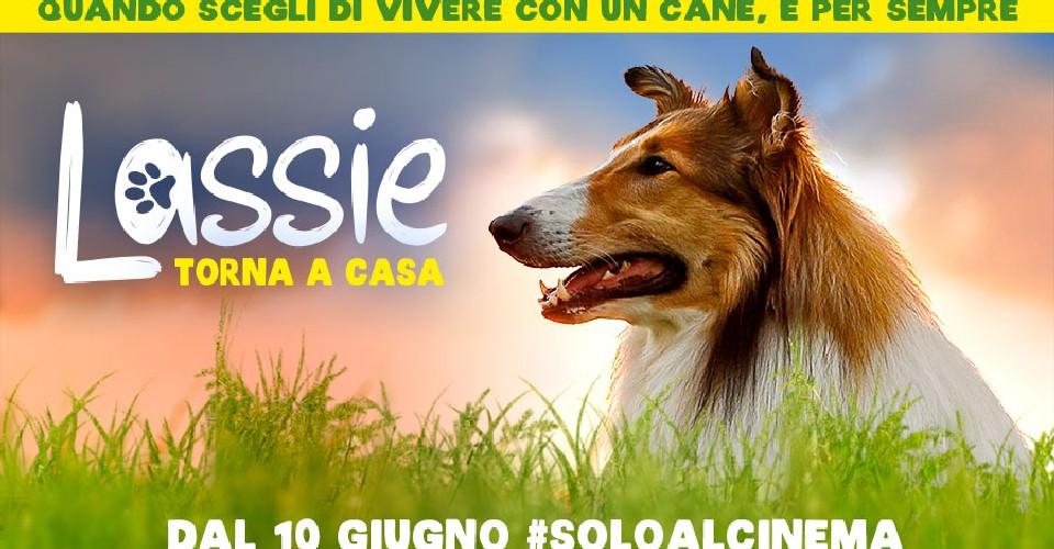 900x500 lassie